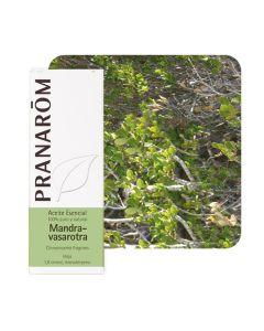 Pranarom eterično ulje mandravasarotra (saro) 10 ml